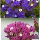 LIMONIUM SINUATUM Statice MIXED Great for Arrangements! ANNUAL