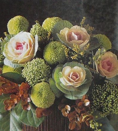 'Bicolor Crane' Flowering Kale ANNUAL Seed COMPACT HEAD