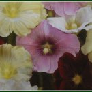 KING HENRY THE EIGHTH Hollyhock Biennial SEEDS