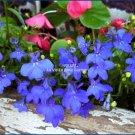 Stunning TRAILING LOBELIA 'Sapphire' Blue ANNUAL Seeds