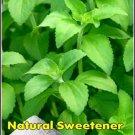 NATURAL SWEETENER Stevia Tender Perennial SEED