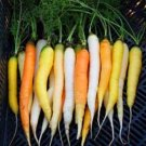 VERY UNIQUE Rainbow Carrots VEGETABLE Seeds