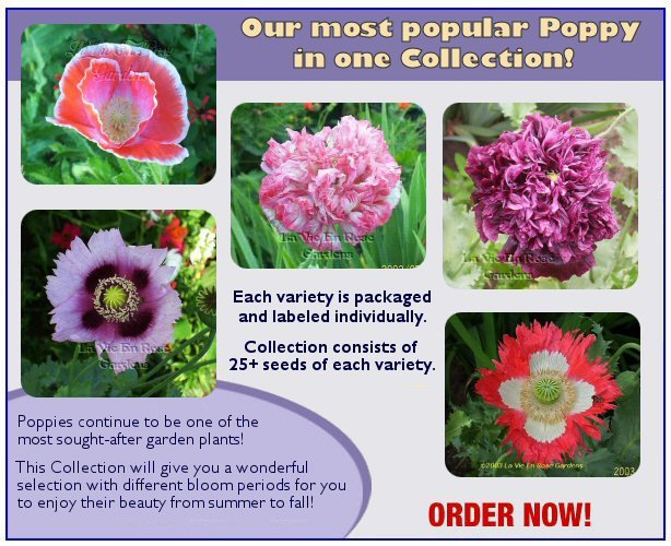 SPECIAL -  Collection of 5 POPPY Seeds varieties