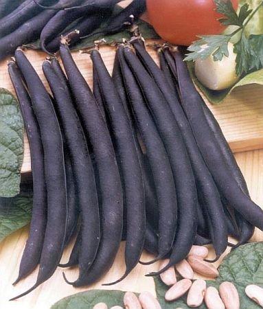 Bush Beans 'Royal Burgundy' (Phaseolus vulgaris) Seeds