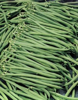 Bush Beans 'Oceanis' (Phaseolus vulgaris) Seeds