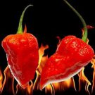 25x Red Bhut Jolokia Seeds Naga Rare Ghost Pepper Chilli  Super HOTTEST Organic