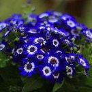 200 White Blue Daisy Flower Seeds Plants Exotic Rare Garden Decor DIY Penerials