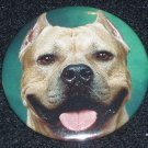 Pit bull on photo badge, pin D 0007