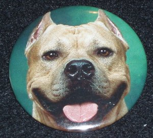 Pit bull on photo badge, pin D 0007