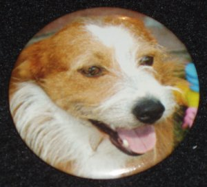 Jack Russell Terrier dog photo on a badge, pin  D 0005