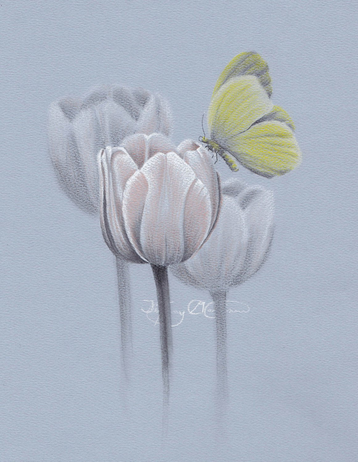 Yellow Butterfly and Tulips Pencil Drawing Gicleé Fine Art Print