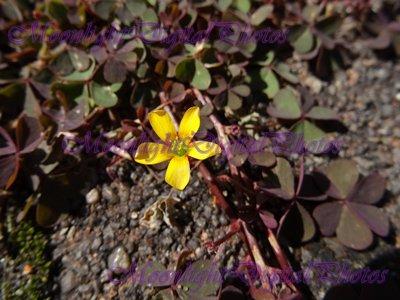 Flower #3