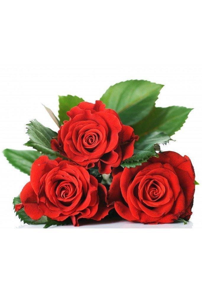 Red Rose 10 seeds