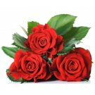 Red Rose 10 seeds