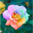 Cotton Candy Rose  10 seeds