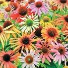 Pastel Mix Coneflower  (Echinacea)  25 seeds