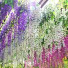 USA SELLER Wisteria Vine Mix (Pink, Violet, White) 6 seeds