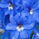 USA SELLER Summer Skies Delphinium 50 seeds