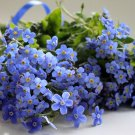 USA SELLER Alpine Blue Forget Me Not 100 seeds