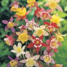 USA SELLER Mkana's Giant Columbine Mix 100 seeds