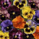 USA SELLER Fruzzle Mix Pansy 25 seeds