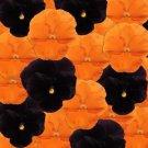 USA SELLER Halloween Mix Pansy 10 seeds seeds