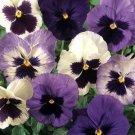 USA SELLER Matrix Ocean Breeze Pansy 10 seeds seeds