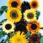 USA SELLER Sunflower Seed Mix 20 seeds