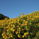 USA SELLER Wild Sunflower 100 seeds