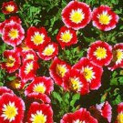 USA SELLER  Ensign Red Morning Glory 10 seeds