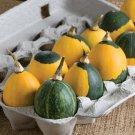 USA SELLER Goblin Egg Gourd Mix 25  seeds
