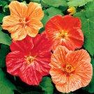 USA SELLER Abutilon Mix 10 seeds