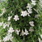 USA SELLER White Climbing Snapdragon 10 seeds