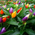 USA SELLER  Prairie Fire Ornamental Pepper 10 seeds