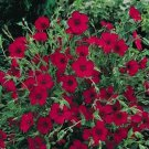 USA SELLER Red Flax 100 seeds