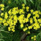 USA SELLER Yellow Flax 100 seeds