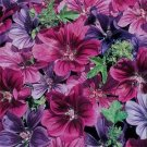 USA SELLER Mystic Merlin Hollyhock 25 seeds