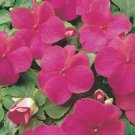USA SELLER Pink Carmine Impatiens 25 seeds