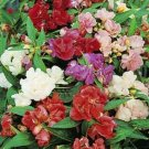 USA SELLER Balsam Impatiens 25 seeds