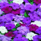 USA SELLER Cascade Beauty Blues Mix Impatiens 25 seeds