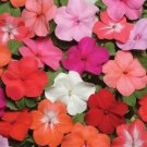 USA SELLER   Super Elfin XP Formula Mix Impatiens 25 seeds