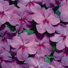 USA SELLER Walleriana Tempo Lavender Impatiens 25 seeds
