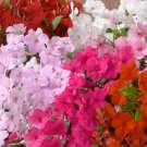 USA SELLER Walleriana Logro Mix Impatiens 25 seeds