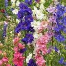 USA SELLER  Larkspur Mix 25 seeds