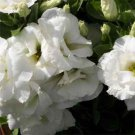 USA SELLER Lisianthus White 25 seeds