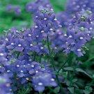USA SELLER Nemesia Blue Gem 100 seeds