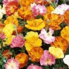 USA SELLER California Poppy Ballerina Mix 200 seeds