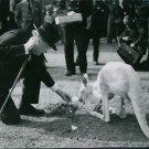 Winston Churchill with kangaroo. - 8x10 photo