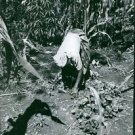 Woman working in farmland. - 8x10 photo