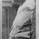 Sarah Bernhardt faint on couch. - 8x10 photo